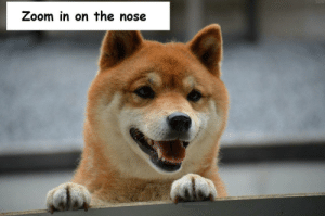 Dank, Memes, and Target: Zoom in on the nose Good bork by Xedrix94 MORE MEMES