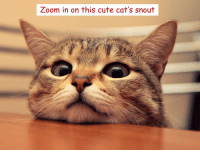 dankmemes You know what to do: Zoom in on this cute cat's snout dankmemes You know what to do