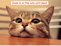 You know what to do: Zoom in on this cute cat's snout You know what to do