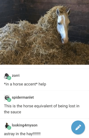 Lost, Help, and Horse: zorri  *in a horse accent* help  spiermanlet  This is the horse equivalent of being lost in  the sauce  looking4myson help