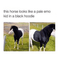 Nobody understands Paramorse.: this horse looks like a pale emo  kid in a black hoodie Nobody understands Paramorse.