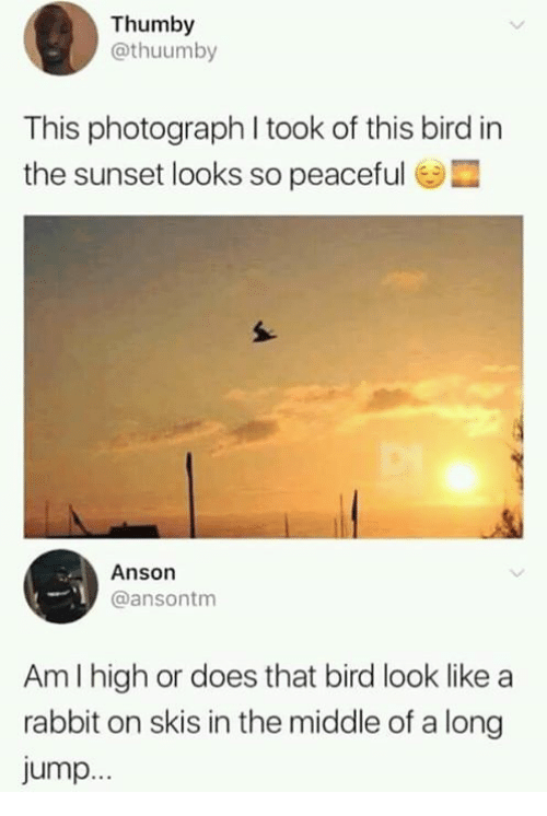 Dank, Rabbit, and Sunset: Thumby  @thuumby  This photograph I took of this bird in  the sunset looks so peaceful  Anson  @ansontm  Am I high or does that bird look like a  rabbit on skis in the middle of a long  jump..