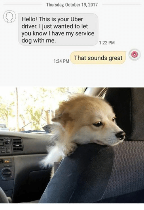 hello this is dog. hello, memes, and uber: thursday, october 19, 2017 hello! this is your uber driver. i just wanted to let you know have my service dog with me. hello