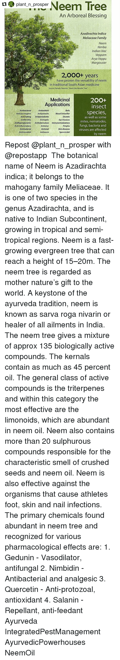 the anti eczema effect of neem oil Both neem leaves and neem oil can be used to treat eczema  for eczema it has anti  effect helps reduce the inflamed eczema.