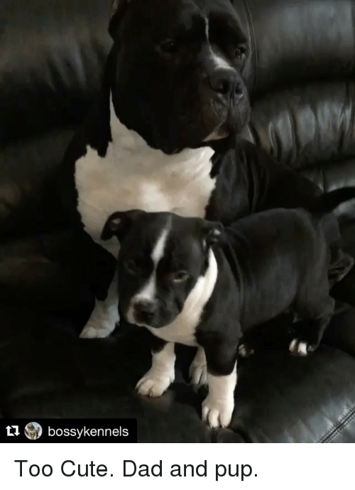 Ti Bossy Kennels Too Cute Dad and Pup | Meme on ME ME