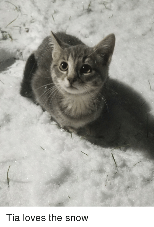 Snow, Tia, and Loves: Tia loves the snow