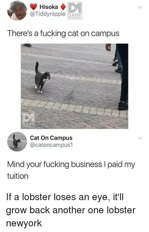 Another One, Dank, and Fucking: @Tiddynipple DANK  There's a fucking cat on campus  Cat On Campus  @catoncampus1  Mind your fucking business I paid my  tuition If a lobster loses an eye, it'll grow back another one lobster newyork