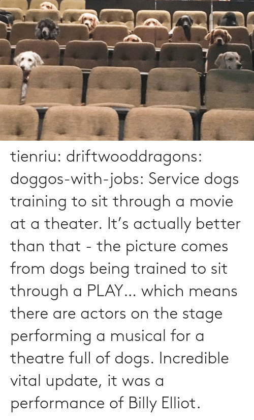 Dogs, Tumblr, and Blog: tienriu: driftwooddragons:  doggos-with-jobs: Service dogs training to sit through a movie at a theater. It's actually better than that - the picture comes from dogs being trained to sit through a PLAY… which means there are actors on the stage performing a musical for a theatre full of dogs.   Incredible vital update,  it was a performance of Billy Elliot.