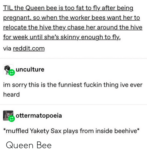 Pregnant, Reddit, and Skinny: TIL the Queen bee is too fat to fly after being  pregnant,so when the worker bees want her to  relocate the hive they chase her around the hive  for week until she's skinny enough to fly.  via reddit.com  unculture  im sorry this is the funniest fuckin thing ive ever  heard  ottermatopoeia  *muffled Yakety Sax plays from inside beehive* Queen Bee