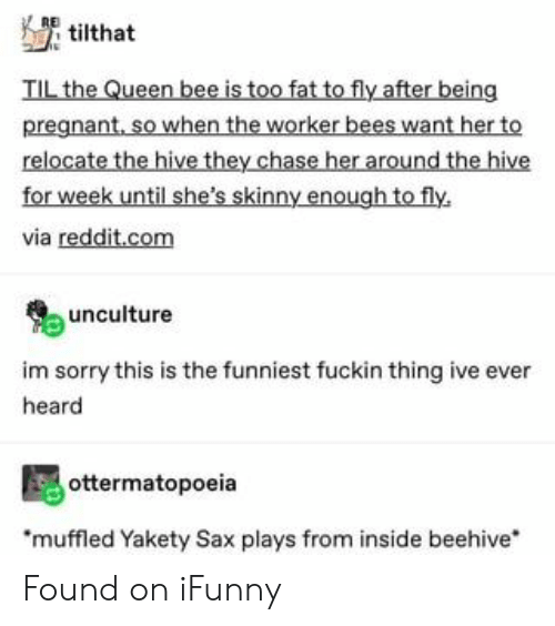 Pregnant, Reddit, and Skinny: tilthat  TIL the Queen bee is too fat to fly after being  pregnant, so when the worker bees want her to  relocate the hive they chase her around the hive  for week until she's skinny enough to fly  via reddit.com  unculture  im sorry this is the funniest fuckin thing ive ever  heard  ottermatopoeia  muffled Yakety Sax plays from inside beehive Found on iFunny