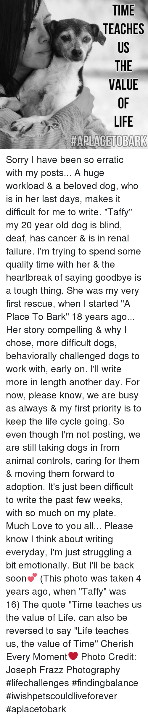 """Memes, 🤖, and Beloved: TIME  TEACHES  US  THE  VALUE  LIFE  HAPLACETOBARK Sorry I have been so erratic with my posts... A huge workload & a beloved dog, who is in her last days, makes it difficult for me to write. """"Taffy"""" my 20 year old dog is blind, deaf, has cancer & is in renal failure. I'm trying to spend some quality time with her & the heartbreak of saying goodbye is a tough thing. She was my very first rescue, when I started """"A Place To Bark"""" 18 years ago... Her story compelling & why I chose, more difficult dogs, behaviorally challenged dogs to work with, early on. I'll write more in length another day. For now, please know, we are busy as always & my first priority is to keep the life cycle going.  So even though I'm not posting, we are still taking dogs in from animal controls, caring for them & moving them forward to adoption. It's just been difficult to write the past few weeks, with so much on my plate.  Much Love to you all... Please know I think about writing everyday, I'm just struggling a bit emotionally. But I'll be back soon💕  (This photo was taken 4 years ago, when """"Taffy"""" was 16) The quote """"Time teaches us the value of Life, can also be reversed to say """"Life teaches us, the value of Time"""" Cherish Every Moment❤️ Photo Credit: Joseph Frazz Photography  #lifechallenges #findingbalance #iwishpetscouldliveforever  #aplacetobark"""