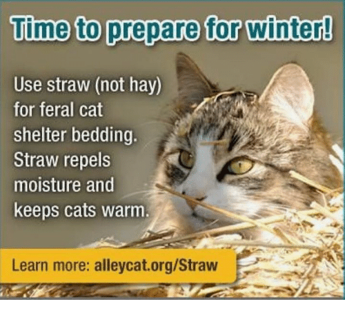 Cats Memes And Winter Time To Prepare For Use Straw
