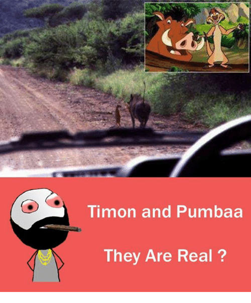 Adult Guide Timon