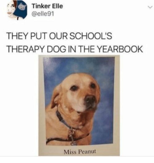 Dog, Tinker, and They: Tinker Elle  @elle91  THEY PUT OUR SCHOOL'S  THERAPY DOG IN THE YEARBOOK  Miss Peanut