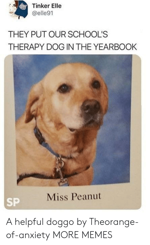Dank, Memes, and Target: Tinker Elle  @elle91  THEY PUT OUR SCHOOL'S  THERAPY DOG IN THE YEARBOOK  Miss Peanut  SP A helpful doggo by Theorange-of-anxiety MORE MEMES