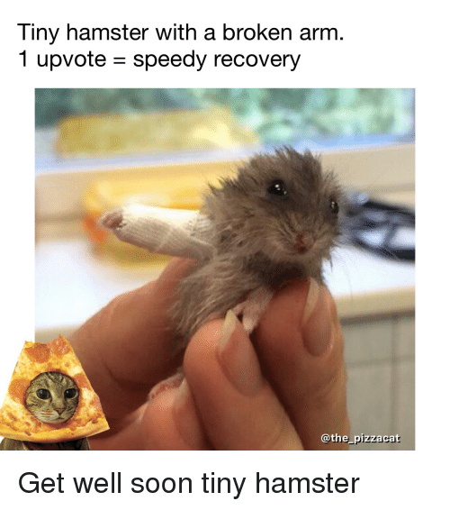 tiny hamster with a broken arm 1 upvote speedy recovery 3433127 tiny hamster with a broken arm 1 upvote speedy recovery pizzac get
