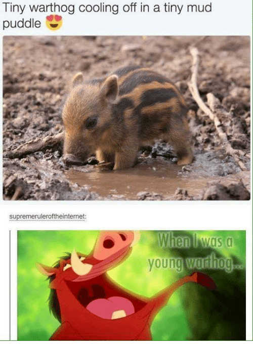 Memes, 🤖, and Mud: Tiny warthog cooling off in a tiny mud  puddle  supremeruleroftheinternet
