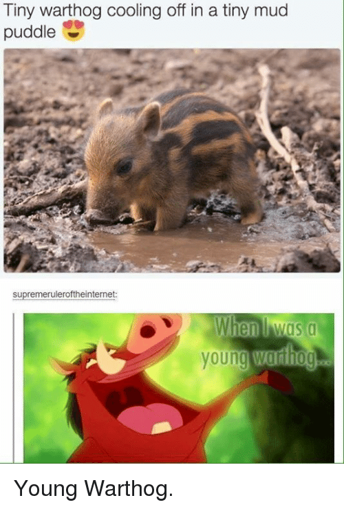 Humans of Tumblr, Mud, and Tiny: Tiny warthog cooling off in a tiny mud  puddle  supremeruleroftheinternet Young Warthog.