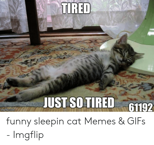 Tired Just So Tired 61192 Imgflipcom Funny Sleepin Cat Memes