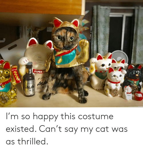 Happy, Super, and Cat: TMEORY  SUPER LU  BR  4S M  sald Asa  FE  Clsha I'm so happy this costume existed. Can't say my cat was as thrilled.