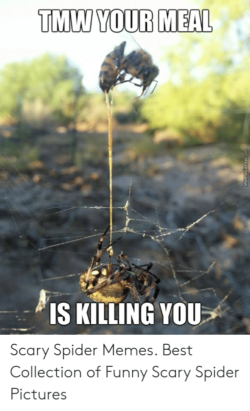 Tmw Your Meal S Killing You Scary Spider Memes Best Collection Of
