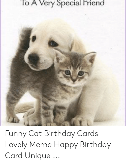 To a Very Special Friend Funny Cat Birthday Cards Lovely Meme Happy