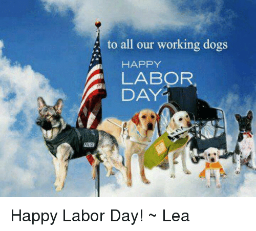 Memes, Labor Day, and 🤖: to all our working dogs  HAPPY  A DAY. Happy Labor Day! ~ Lea