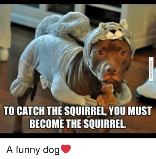 To Catch The Squirrel You Must Become The Squirrel A Funny Dog