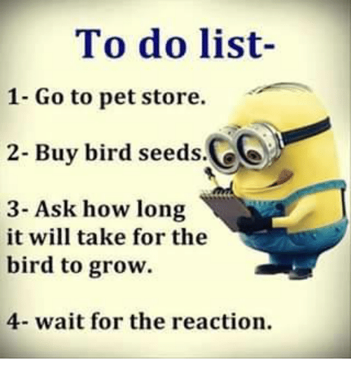 To Do List- 1- Go to Pet Store 2- Buy Bird Seeds Ce 3- Ask How Long