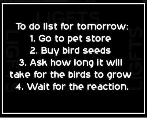 To Do List for Tomorrow 1 Go to Pet Store 2 Buy Bird Seeds 3 Ask How