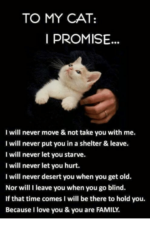 To MY CAT I PROMISE I Will Never Move & Not Take You With ...