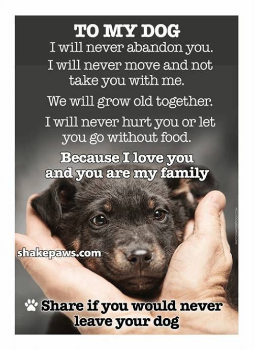 To My Dog I Will Never Abandon You I Will Never Move And Not Take