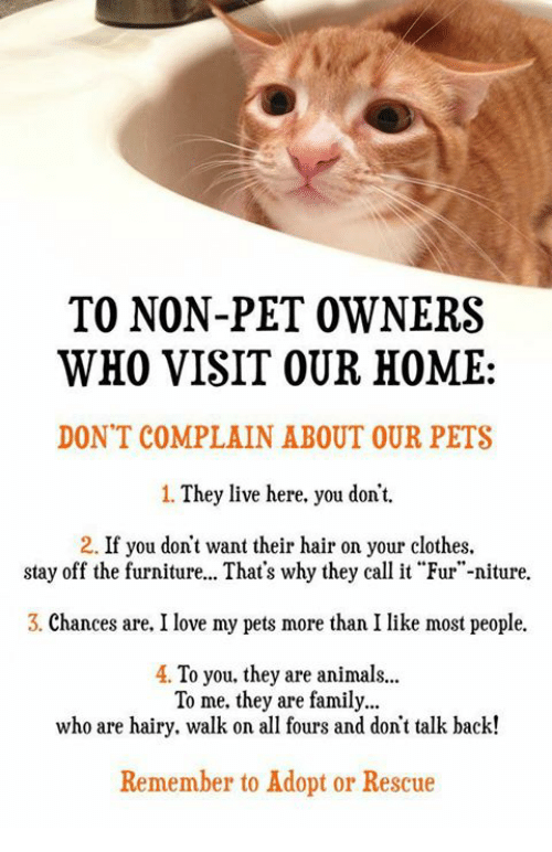 Memes, They Live, And 🤖: TO NON PET OWNERS WHO VISIT OUR