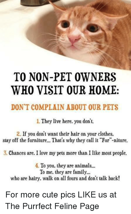 "Animals, Clothes, and Cute: TO NON-PET OWNERS  WHO VISIT OUR HOME:  DON'T COMPLAIN ABOUT OUR PETS  1. They live here. you dont.  2. If you don't want their hair on your clothes.  stay off the furniture... That's why theyal Fur""-niture.  3. Chances are. I love my pets more than I like most people.  4. To you. they are animals...  To me. they are family...  who are hairy. walk on all fours and don't talk back! For more cute pics LIKE us at The Purrfect Feline Page"