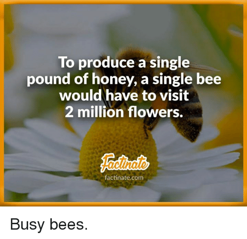 To Produce a Single Pound of Honey a Single Bee Would Have to Visit