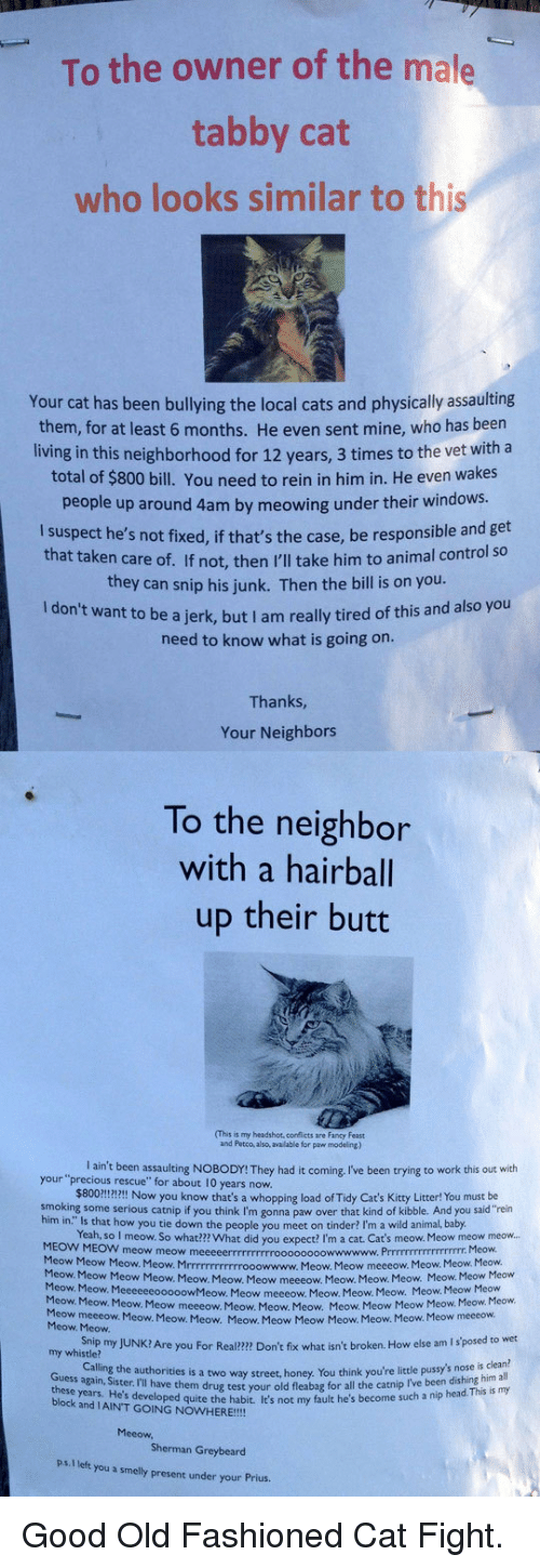 """Butt, Cats, and Head: To the owner of the male  tabby cat  who looks similar to this  Your cat has been bullying the local cats and physically assaulting  them, for at least 6 months. He even sent mine, who has been  living in this neighborhood for 12 years, 3 times to the vet with a  total of $800 bill. You need to rein in him in. He even wakes  people up around 4am by meowing under their windows.  I suspect he's not fixed, if that's the case, be responsible and get  that taken care of. If not, then I'll take him to animal control so  they can snip his junk. Then the bill is on you  ant to be a jerk, but I am really tired of this and also you  need to know what is going on  Thanks  Your Neighbors  To the neighbor  with a hairball  up their butt  (This is my headshot, corflicts are Fancy Feast  and Petco, also, available for paw modeling)  your 'precaug reen ssaulting No8oDr They had it coming Iive been trying to work this out weh  I ain't been assaulting NOBODY! They had it coming, I've been trying to work this out with  $800!!!!I Now you know that's a whopping load of Tidy Cat's Kitty Litter! You must be  Yeah, so I meow. So what??? What did you expect? I'm a cat. Cat's meow. Meow meow meow...  rescue"""" for about 10 years now.  smoking some serious catnip if you think I'm gonna paw over that kind of kibble. And you said""""rein  him in."""" Is that how you tie down the people you  meet on tinder? I'm a wild animal, baby  MEOW MEOW meow meow m  Meow Meow Meow. Meow. Mrrrrrrrrrrrrooowwww.  Meow. Meow  Meow. Meow  Meow. Meow. Meow. Meow meeeow.  Meow  Meow. Meow.  Mcow  Meow Meow meeeow. Meow. Meow. Meow.  Meow Meow. Meow. Meow. Meow meeeow Meow. Meow. Meow.  Meow. Meow Meow  Meow meeeow. Meow. Meow. Meow. Meow. Meow Meow  Heow Meow Mwoweow  Meow. Meow. Meow. Meow Meow Meow Meow. Meow. Meow.  meeeow. Meow. Meow. Meow. Meow. Meow Meow Meow. Meow. Meow. Meow meeeow.  Snip my JUNK? Are you For Real?2m Don't fix what isn't broken. How else am I s'posed to wet  Calling the autho"""