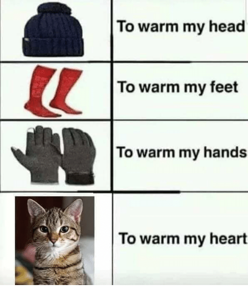 Head, Memes, and Heart: To warm my head  To warm my feet  To warm my hands  To warm my heart