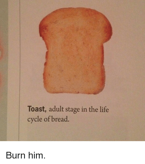 Funny, Toast, and Cycling: Toast, adult stage in the life  cycle of bread Burn him.