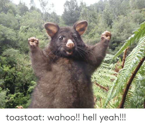 Tumblr, Yeah, and Blog: toastoat: wahoo!! hell yeah!!!