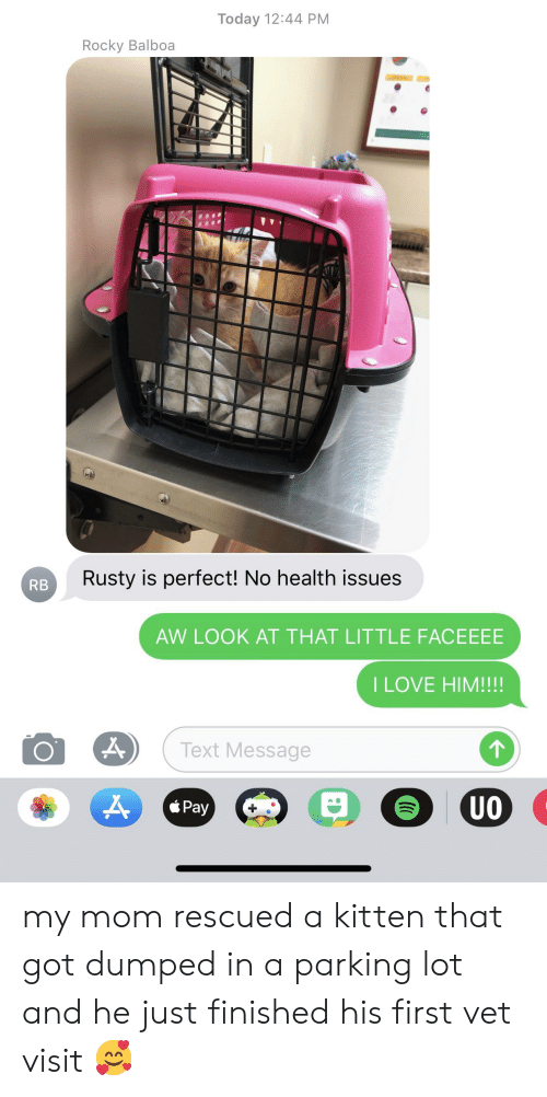 Love, Rocky, and Rocky Balboa: Today 12:44 PM  Rocky Balboa  Rusty is perfect! No health issues  RB  AW LOOK AT THAT LITTLE FACEEEE  I LOVE HIM!!!!  Text Message  UO  á Pay my mom rescued a kitten that got dumped in a parking lot and he just finished his first vet visit 🥰