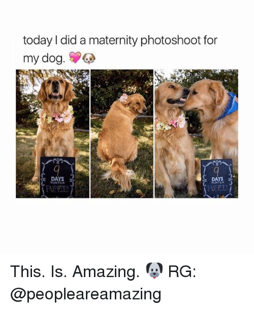 Girl,  Photoshootings, and Photoshoot: today did a maternity photoshoot for  my dog.  DAYS  DAYS  BUNTILE  HUNTELE This. Is. Amazing. 🐶 RG: @peopleareamazing