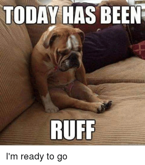 Today has been ruff i 39 m ready to go meme on for Ready to go images