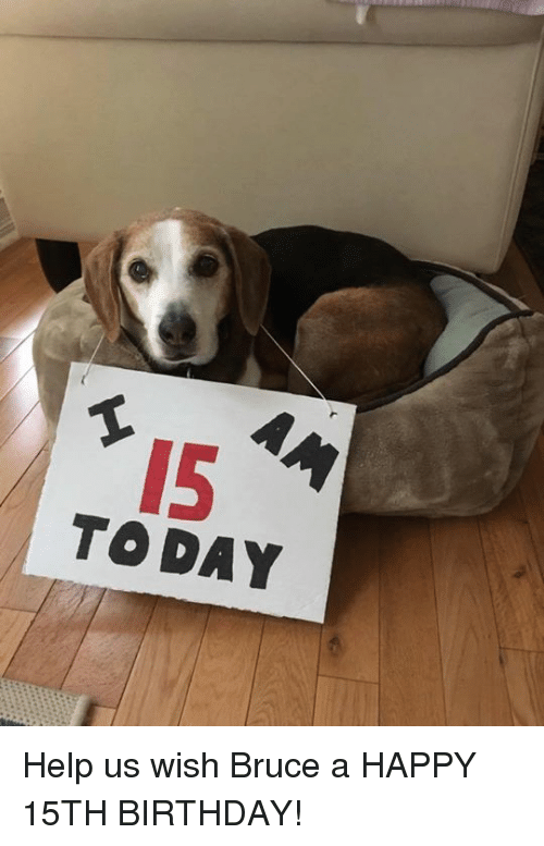 Today Help Us Wish Bruce A Happy 15th Birthday Birthday Meme On Meme