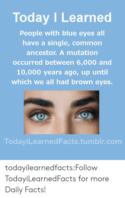 Facts, Tumblr, and Blog: Today I Learned  People with blue eyes all  have a single, common  ancestor. A mutation  occurred between 6,000 and  10,000 years ago, up until  which we all had brown eyes.  TodaviLearned Facts.tumblr.com todayilearnedfacts:Follow TodayiLearnedFacts for more Daily Facts!