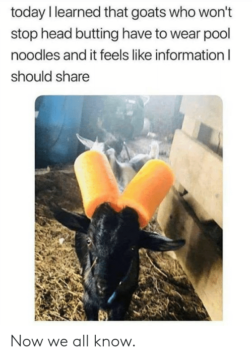 Dank, Head, and Information: today I learned that goats who won't  stop head butting have to wear pool  noodles and it feels like information I  should share Now we all know.