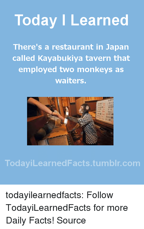 Facts, News, and Tumblr: Today ILearned  There's a restaurant in Japan  called Kayabukiya tavern that  employed two monkeys as  waiters.  TodayiLearnedFacts.tumblr.com todayilearnedfacts: Follow TodayiLearnedFacts for more Daily Facts! Source
