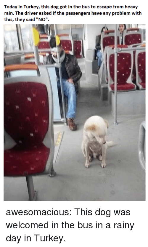 """Tumblr, Blog, and Http: Today in Turkey, this dog got in the bus to escape from heavy  rain. The driver asked if the passengers have any problem with  this, they said """"NOo"""" awesomacious:  This dog was welcomed in the bus in a rainy day in Turkey."""