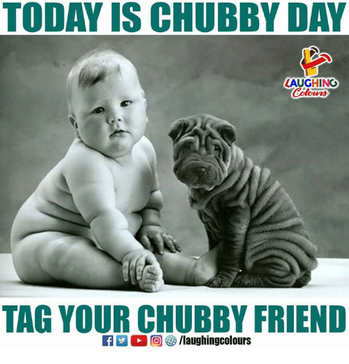 Download Cubby Chubby Adorable Dog - today-is-chubby-day-laughing-tag-your-chubby-friend-28540078  Pictures_648331  .png