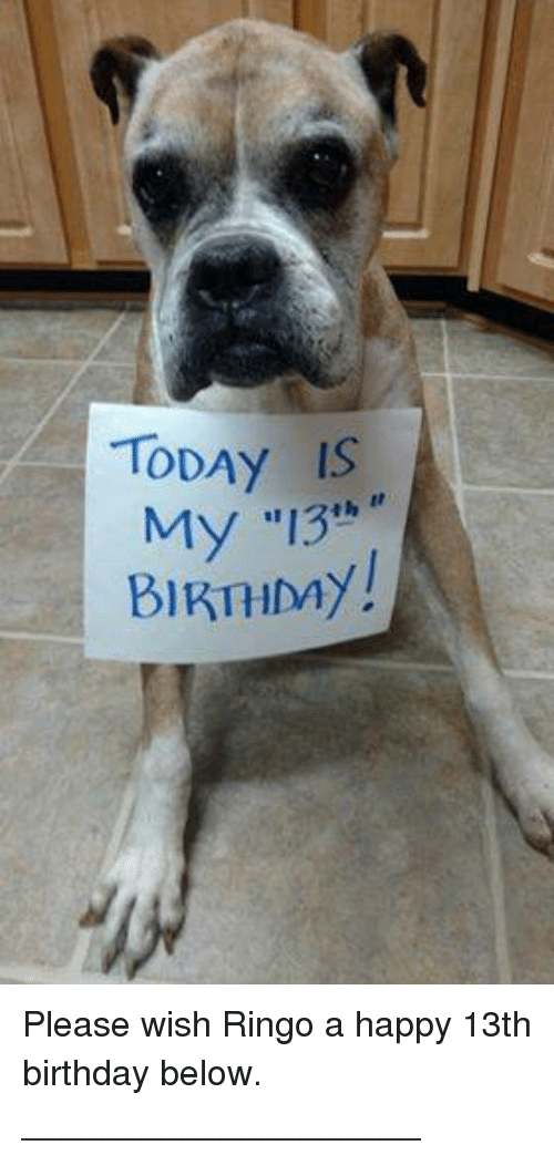 Memes And Ringo TODAY IS My 13 BIRTHMY Please