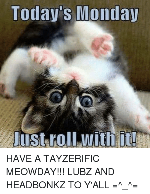 today monday just roll with it have a tayzerific meowday lubz